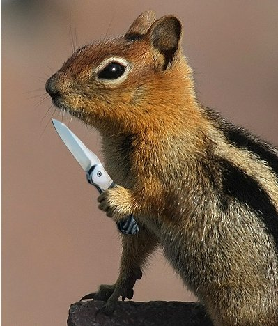 squirrel_knife